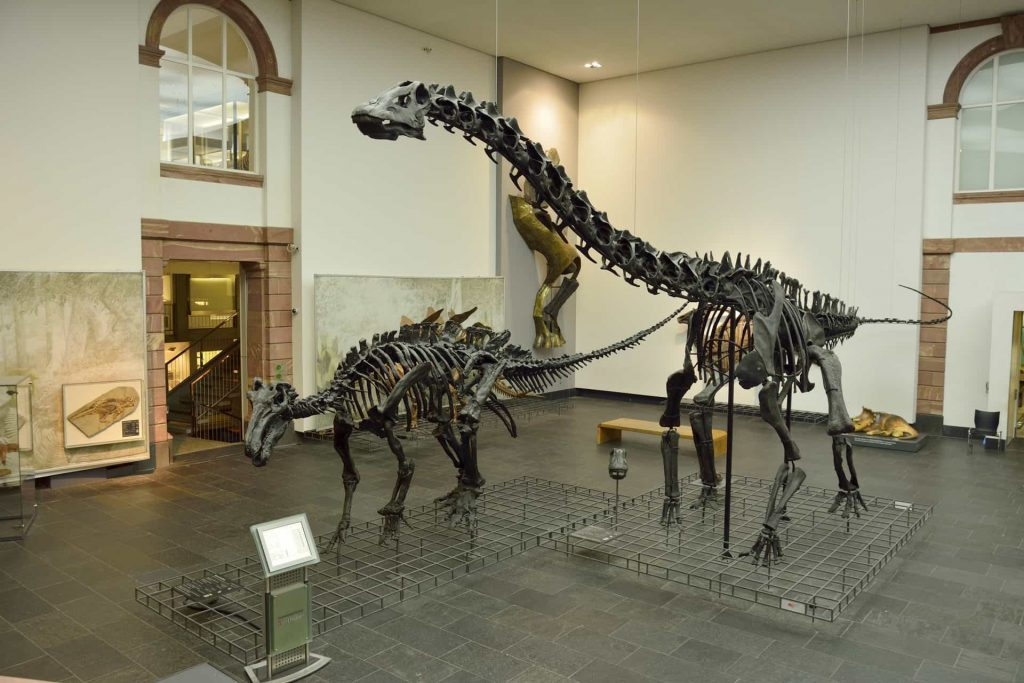 5 Senckenberg Museum