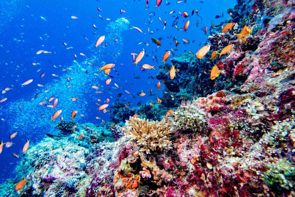 Maldives-corals-house-for-Fishes-underwater-landscape-min