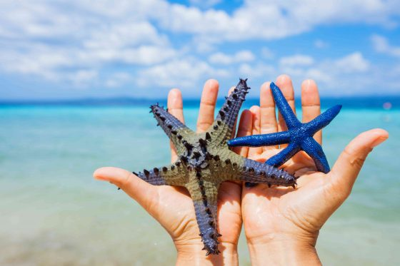 Starfish-in-girl-hands-min