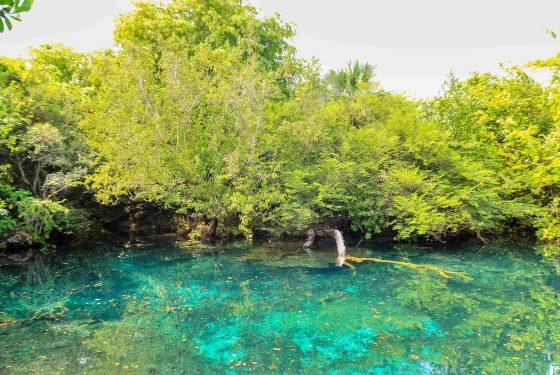 Indigenous-Eyes-Ecological-Park-min