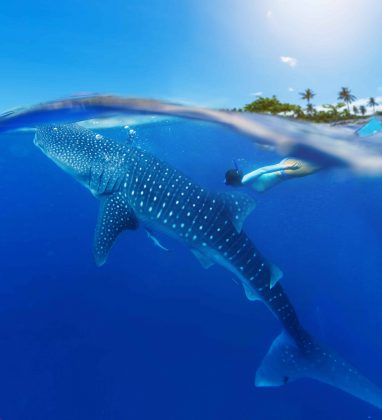 Woman-snorkeling-with-whale-shark-min