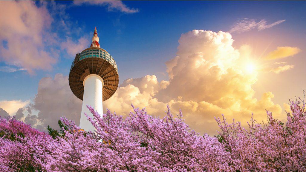 cherry-blossom-spring-seoul-tower-sunset
