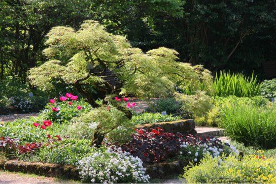 Linz_garden.jpg