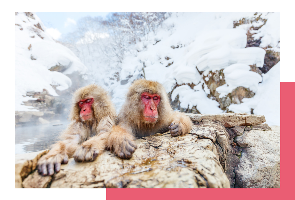 Парк снежных обезьян Джигокудани | Crazy Llama